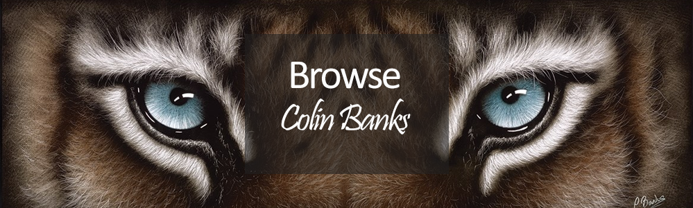 Colin Banks Prints - Tiger Wildlife Artwork